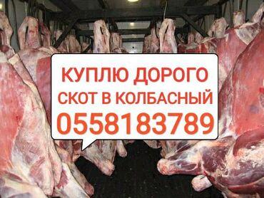 купить постельное белье для гостиниц в розницу в Кыргызстан: В КОЛБАСНЫЙ ЦЕХ куплю скот Любой УПИТАННОСТИ