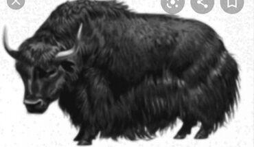 С/х животные в Кыргызстан: Кой, уй, жылкы сойуп устукандап беребиз.Эт бышыруу касапчылык