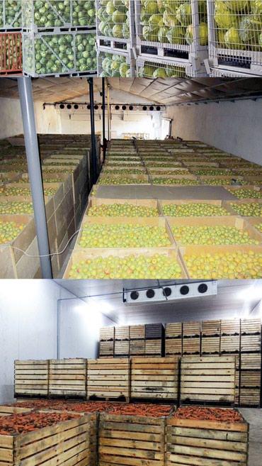 яблоки апорт в Кыргызстан: Продаю срочно холодильник !!! Сохрани до весны, продай, получи