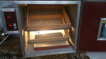 Lənkəran şəhərində Şəkildəki  inkubator satilir,lənkərandadir,avtomatikdir 196 toyuq yumu