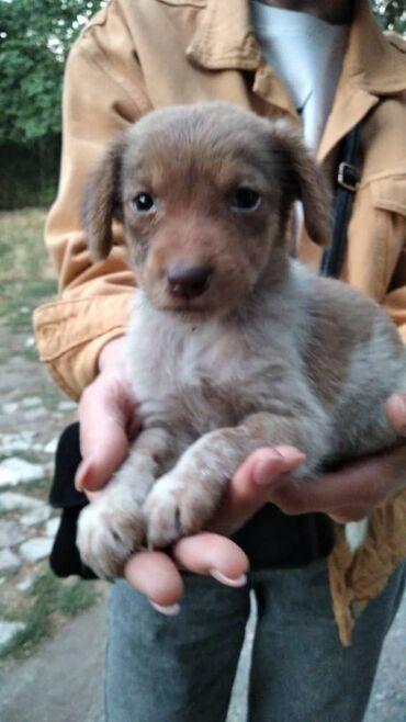 10927 объявлений: Фонд помощи Животным добрые руки, ищем дом для щеночка, маленький