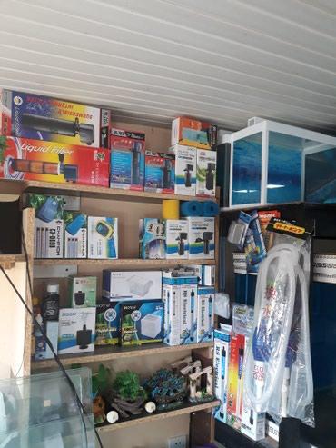 Bakı şəhərində Akvariumlar baliqlar avadanliqlar hamsi bir unvanda