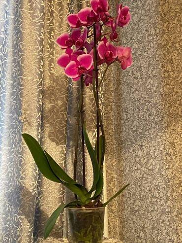 Комнатные растения - Кыргызстан: Другие комнатные растения