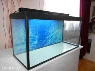 Bakı şəhərində 100litrelik akvarium qapaqli arxa fon wekili hediyye