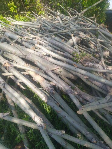 Животные - Гавриловка: Продаю дрова