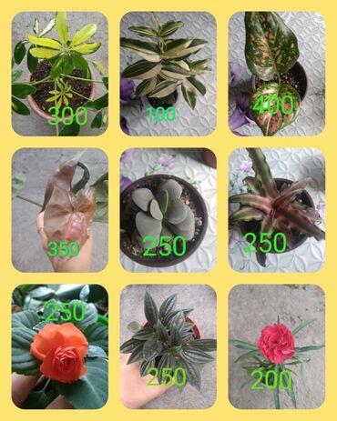 847 объявлений: Срочно продаю цветы