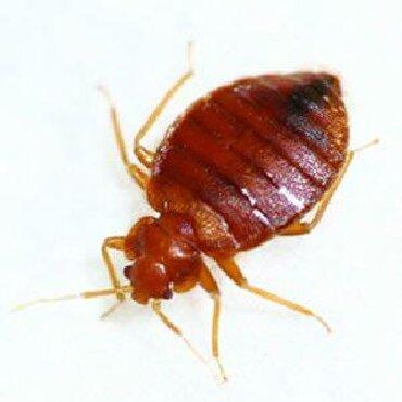 убираем м в Кыргызстан: У вас дома заявились клопы блохи муравье тогда звоните нам, мы вам п