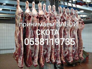 прием макулатуры бишкек адреса в Кыргызстан: Прием в колбасный цех . Звоните в любое время