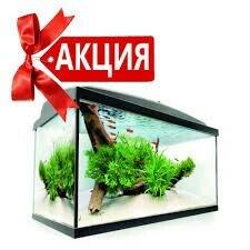 Новогодняя АКЦИЯ!!! При заказе в Лебединовка