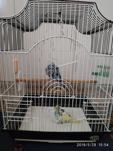 Продаю клетку, без попугаев.в очень хорошем состоянии. в Бишкек
