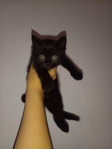 квартира токмок in Кыргызстан | ГРУЗОВЫЕ ПЕРЕВОЗКИ: Отдаём котёнка исключительно в добрые руки. Девочка родилась в квартир