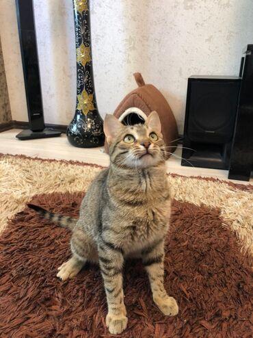 인터 컨티넨탈 코엑스편의점파라다이스시티호텔【카카오톡:zA32】 - Azərbaycan: Котёнок в добрые руки мальчик 8 месяцев только ответственным людям