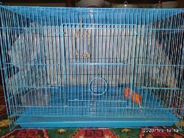 накидка на клетку попугая в Кыргызстан: Продаю клетку для попугаев подойдёт и для мелких грызунов. 60/40/40