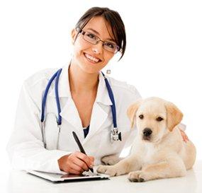 """Требуется ветеринар в частную клинику  """"revite"""" в Бишкек"""