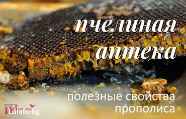 Устали от самолечения?! Предоставьте в Бишкек