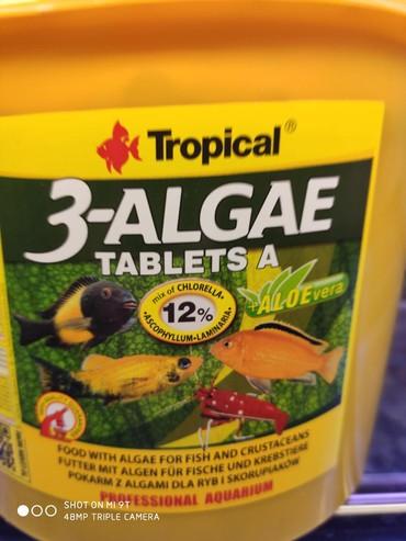 Tropical 3-Algae Tablets A Orjinal Tablet Bitkisel Balık