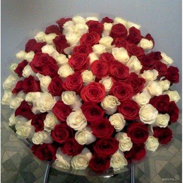 101 роза - хит продаж сезона! красивые в Бишкек