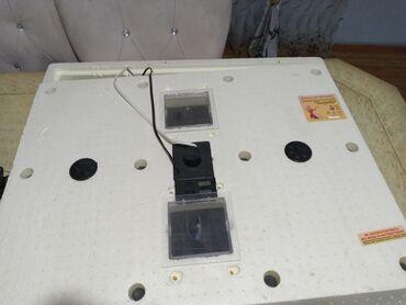 15 elan | HEYVANLAR: Новый инкубатор бытовой Золушка 70 куриных яиц 40 гусиных новый