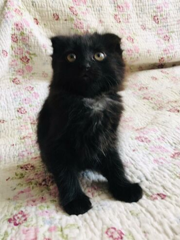 Красивые и игривые котята вчера исполнилось 2 месяца котёнка тигрового