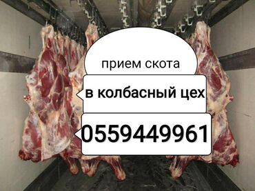 С/х животные - Кыргызстан: В КОЛБАСНЫЙ ЦЕХ ПРИНИМАЕМ СКОТИНУ ЛЮБОЙ УПИТАННОСТИ в любое время