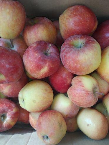 Овощи, фрукты - Кыргызстан: Яблоки из Таласа .Голдон,опорт