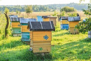 Животные - Корумду: Продаю пчелосемьи оптом и в розницу. Иссык-Кульская область, село Була