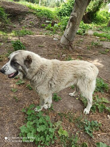Животные - Юрьевка: Собаки