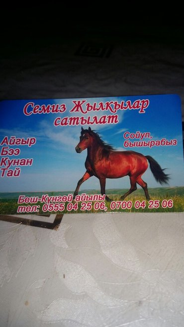 откормленные лошади сойуп бышырабыз 25000-80000сом в Лебединовка