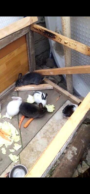 Şirin dovşan balaları yuvalarini da satıram hamısını birdən alan olurs