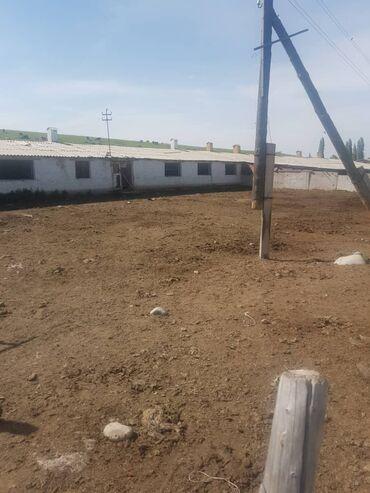 Недвижимость - Кыргызстан: Продаю кашару,свет вода 1.5 гектара село Байтик 8 км от Бишкека