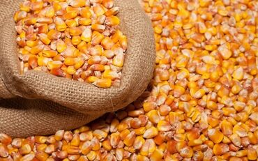 пластик для потолка цена в Кыргызстан: Кукуруза рушенная, высший сорт