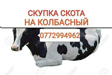 черно белое платье в пол в Кыргызстан: СКУПАЕМ ДОРОГО НА КОЛБАСНЫЙ КОРОВ ЛОШАДЕЙ БЫЧКОВ ТЁЛОК И ВЫНУЖДЕНЫЙ