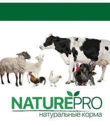 Корм для разных видов животных  в Бишкек