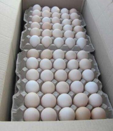 Инкубационный яйцо бройлера