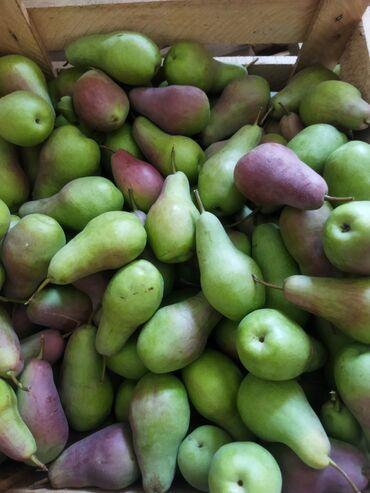 115 объявлений: Продаю Иссык Кульские груши Талгарка 40кг, лесная 20кг сочные,вкусные
