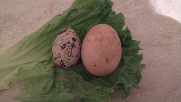 - Azərbaycan: Bildirçin yumurtası
