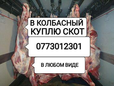Ночной крем для лица - Кыргызстан: Куплю скот и вынужденый забой скота в колбасный цехзвонить в любое