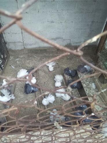 Животные - Кунтуу: Птицы