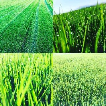 профессиональная стрижка газонов в Кыргызстан: Газон сеем