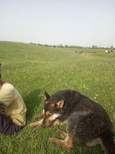 Услуги ветеринара - Кыргызстан: Услуги ветеринара