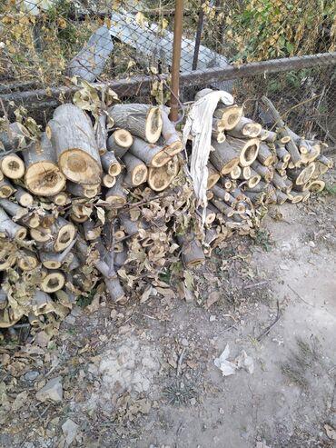 Все для дома и сада - Сокулук: Продаю дрова ореха, тополя(пеньки). Село Сокулук. Самовывоз и