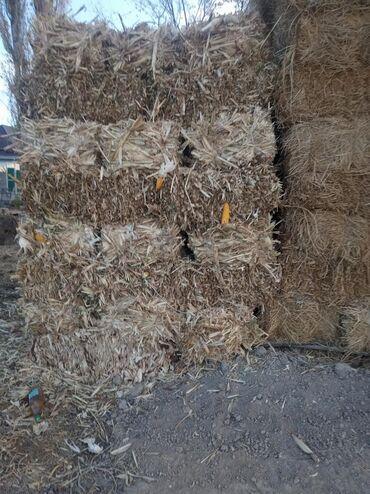 Другие товары для сада - Каинды: Тюки кукурузных стеблей, бакал тюк. 70 штук