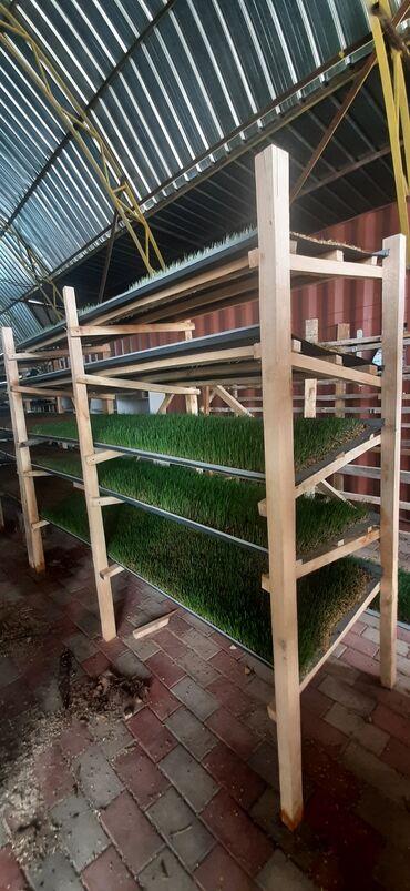 С/х животные - Кыргызстан: Изготавливаем полки для выращивании гидропонного корма любой