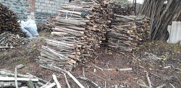 Kömür, odun - Azərbaycan: Tendir ucun cirpi baglari 1000 eded. Razilasmayolu ile