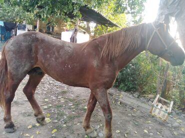48 объявлений   ЖИВОТНЫЕ: Лошади, кони