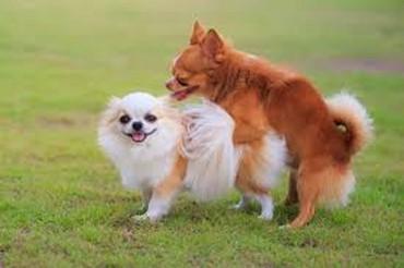 Για σκύλους σε Central Tzoumerka