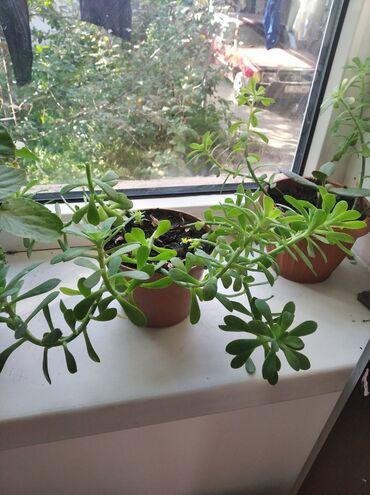 Горшки для растений - Кыргызстан: Горшки для растений