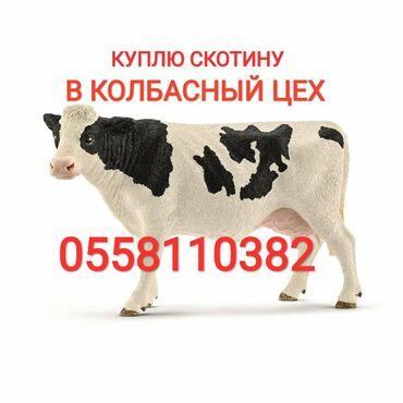 802 объявлений   ЖИВОТНЫЕ: Скупаем коров лошадей телок на забой в колбасный цех