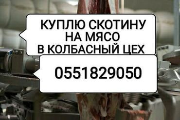 С/х животные - Кыргызстан: КУПЛЮ НА МЯСО КОРОВ ЛОШАДЕЙ БЫКОВ ТЁЛОК И ВЫНУЖДЕНЫЙ ЗАБОЙ