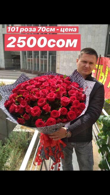 Розы, Розы в Бишкеке, Розы оптом.   Букет из 51 розы 70см - 1400 сом